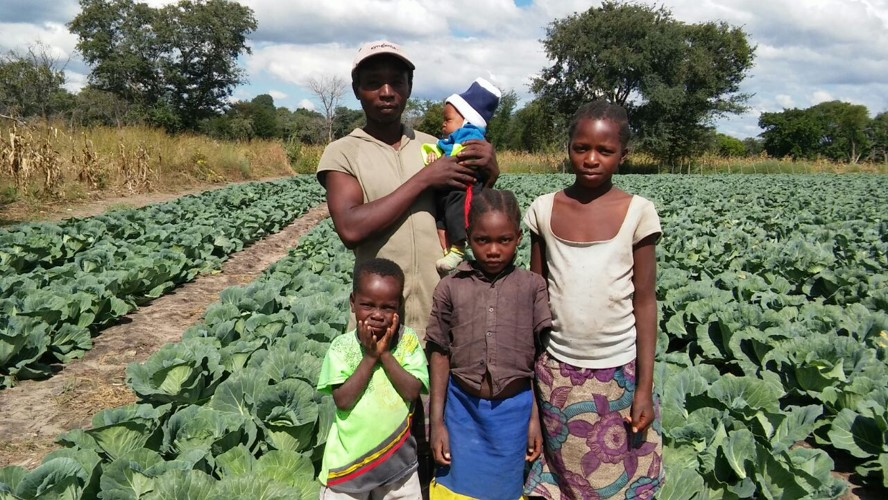 AgricultSURE has, through the years, empowered many small-scale farmers and their families, such as this cabbage farmer on the banks of the Zambezi River in Sesheke, Zambia. Photo: Supplied