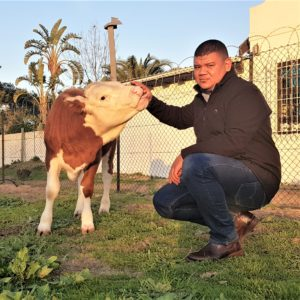 Breyton Milford has loved cattle and farming since his childhood days. Photo: Supplied.