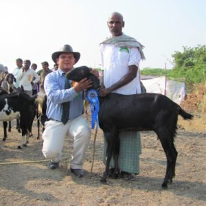 Milford judging goats in India. Photo: Supplied.