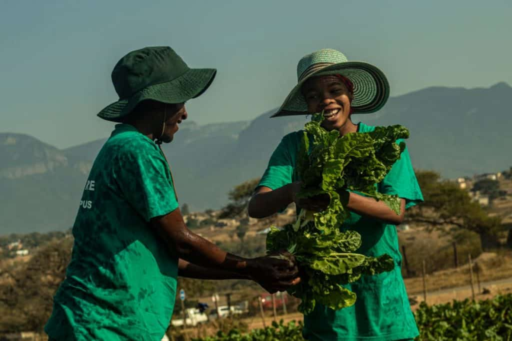 Taetso Tsebogo with his mom harvesting their spinach. Photo: Supplied.