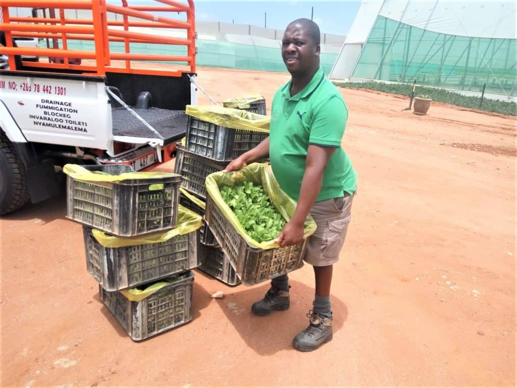 Chillyboy Rathando farms with butternut, brinjals, cotton, maize and vegetables. Photo: Supplied.