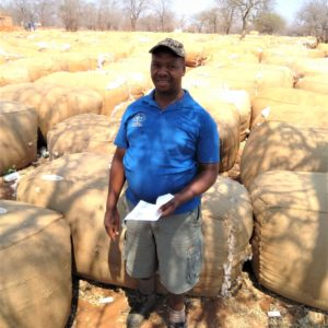 Chillyboy Rathando farms with cotton in Zimbabwe with a friend. Photo: Supplied.