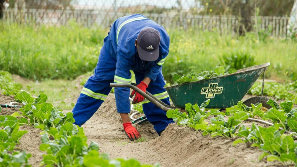By increasing the national minimum wage above inflation will lead to the job losses for farmworkers, driving them into poverty, warns Agri SA. Photo: Supplied/Food For Mzansi
