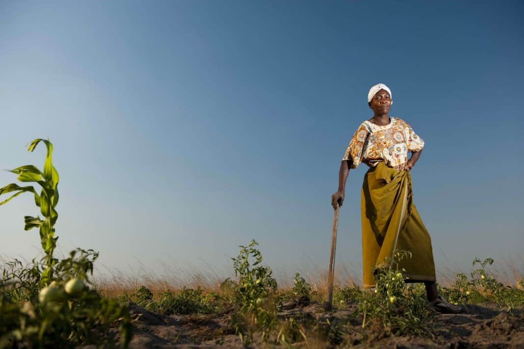 The department of agriculture, land reform and rural development will soon lift the veil on a new fund to support 36 female farmers in the subsistence and smallholder categories who are in dire distress as a result of financial losses suffered due to the SARS-CoV-2 pandemic. Photo: Foodandmigration.com