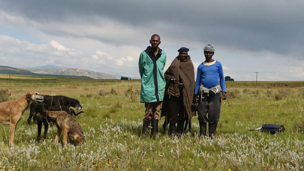Farm workers pictured earlier in the eastern Free State. Photo: PLAAS.org.za