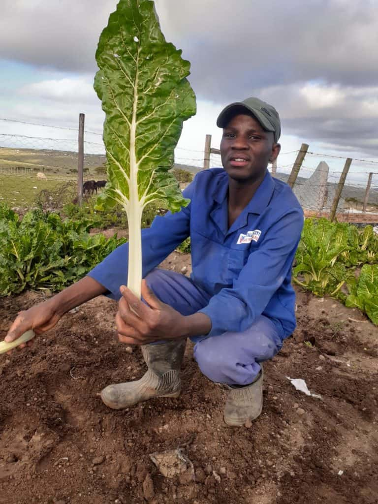 20-year-old Nkosinathi Makamela is a young man who recently took his first steps into the small-scale farming, but he has big dreams to become a commercial farmer in the future. Photo: Supplied