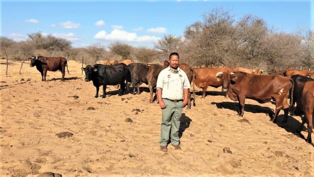 Tiro Mongwaketsi farms on 1814 hectares of land with livestock. Photo: Supplied.