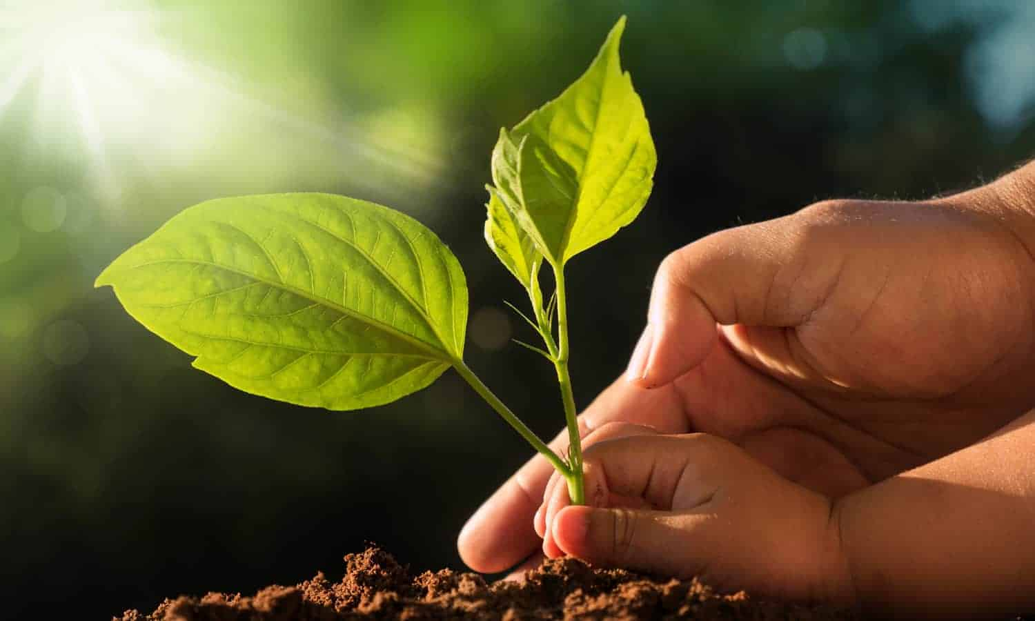 "The theme of World Soil day 2020, according to the Food and Agriculture Organization (FAO) campaign, is ""Keep soil alive, protect soil biodiversity"". By encouraging people around the world to engage in proactively improving soil health, the campaign aims to fight soil biodiversity loss. Photo: Supplied"