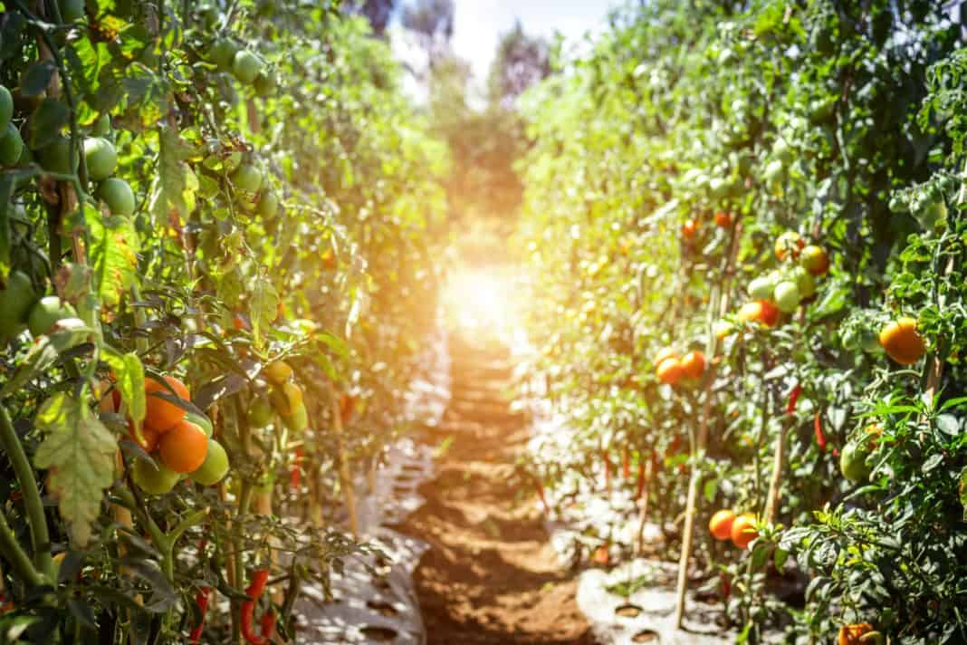 The Agribusiness Confidence Index rose to its highest level in six years and there is strong optimism about the 2020-2021 production season. Photo: Pexels.