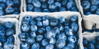 A messy blueberry legal battle between Western Cape-based Ross Berries and United Exports in Canning Vale in Australia are a cause of concern for other fruit industries in Mzansi. Photo: Pexels.