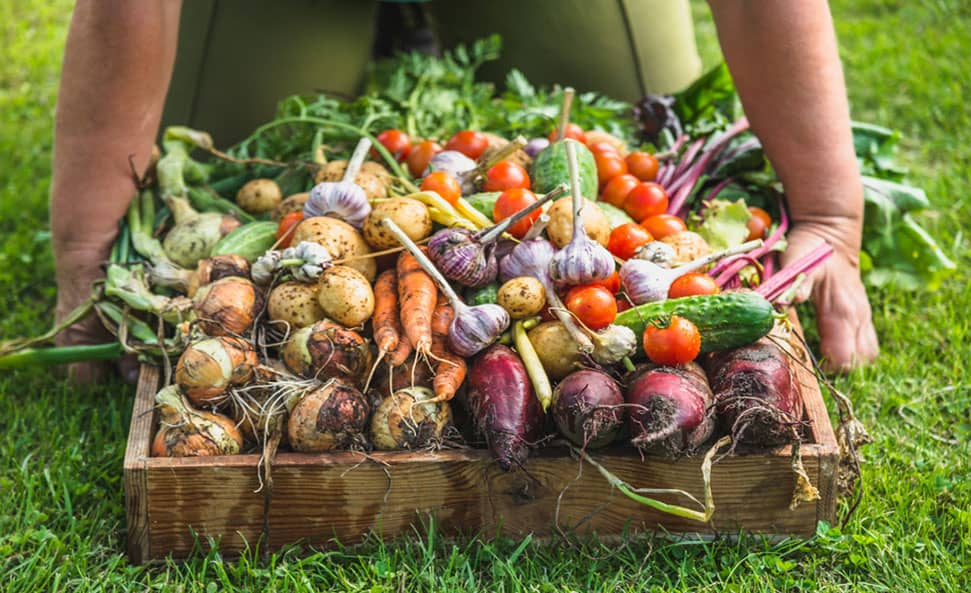 Regenerative agriculture is about farm management that works with nature rather than against nature, forming carbon loops rather than a series of carbon emissions that take carbon from the soil into the sky. This rebuilds the soil, stimulating the microbiology and fixing the water cycle. Photo: Supplied/Food For Mzansi