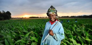 Food insecurity: African farmers are not ageing out of the sector.