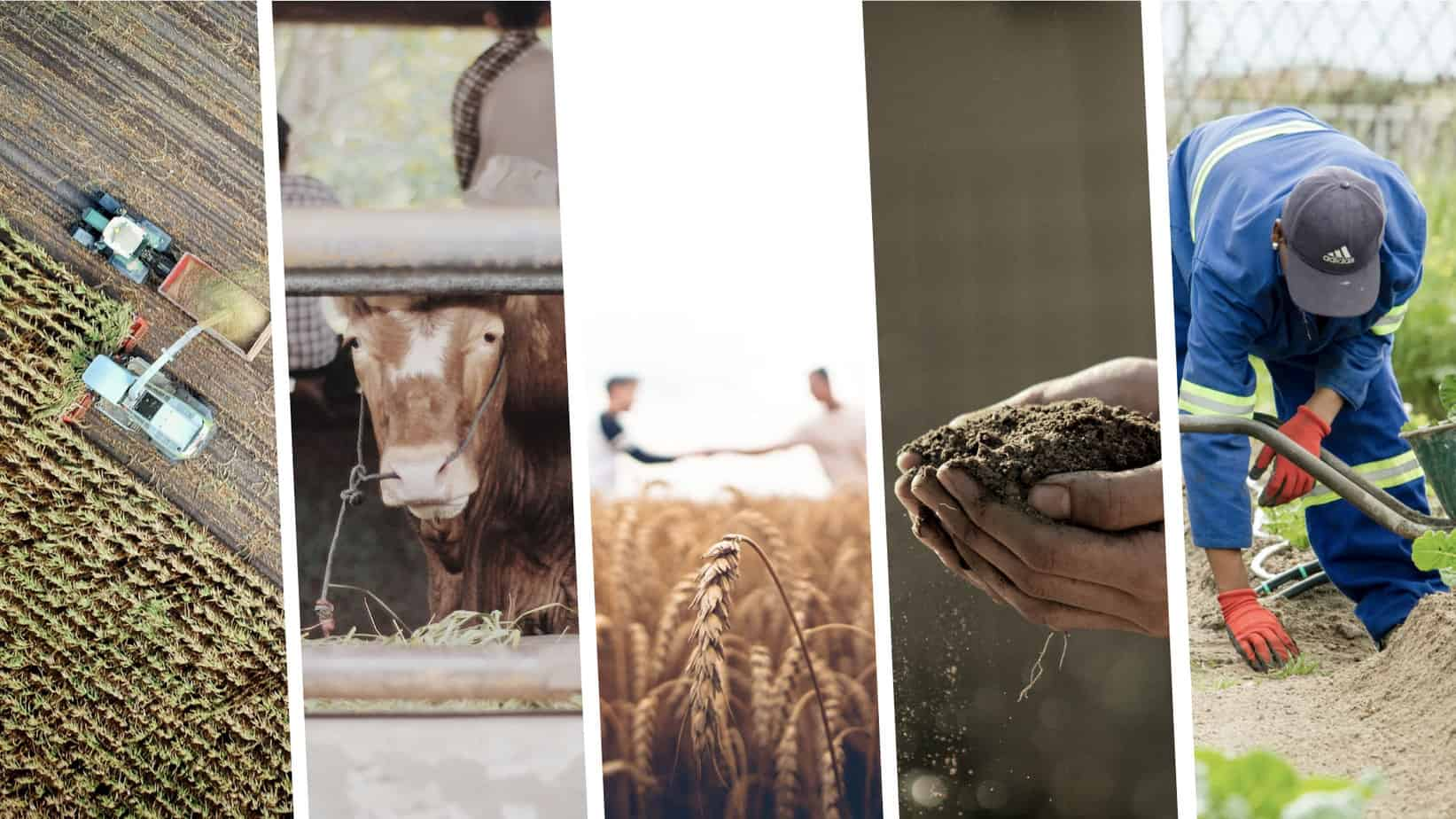 Future farmers put internships on hold