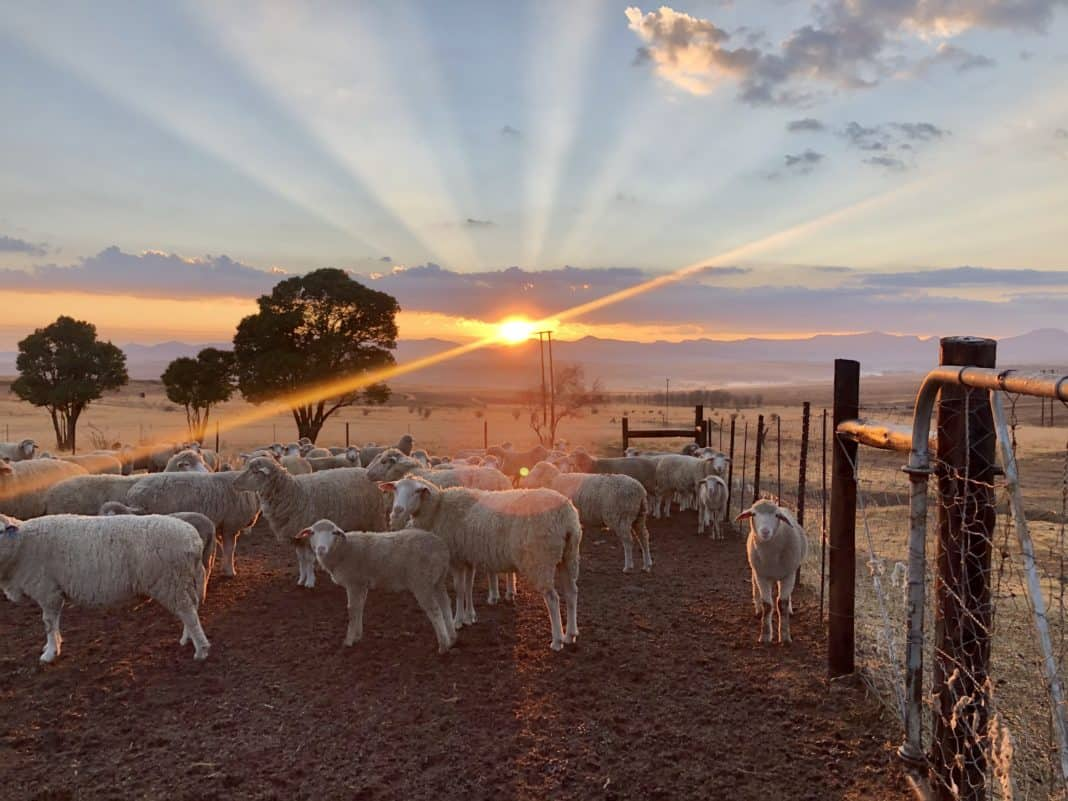 A new dawn breaks for land reform in South Africa with the launch of the Maluti Farming PALS in the Eastern Free State. This is described as a grassroots initiative of cooperation and partnerships between farmers. Photo: Ivor Price/Food For Mzansi