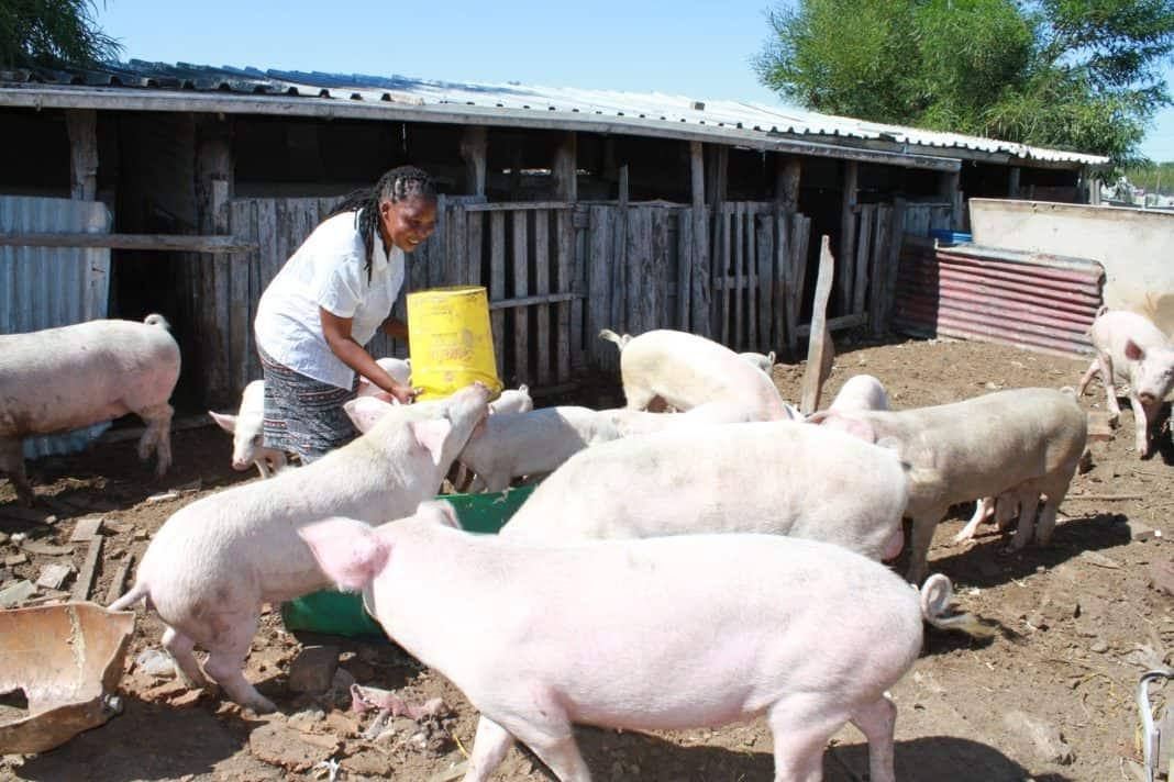 To be successful you have to love what you do, says budding Western Cape pig farmer Noncedo Khawuleza-Ndzawuse. Photo: Velani Ludidi/GroundUp