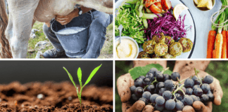 Let's go, Monday! It's Milk Day. We're attending two soil health webinars and going plant-based for Vegan Monday. Plus, the official countdown has begun for this year's Nedbank Vinpro Information Day. Photos: Supplied