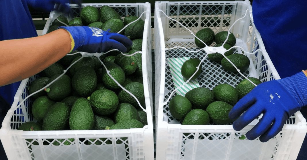 South Africa's fresh fruit industry is currently the largest exporter of agricultural products. Photo: Supplied/Food For Mzansi