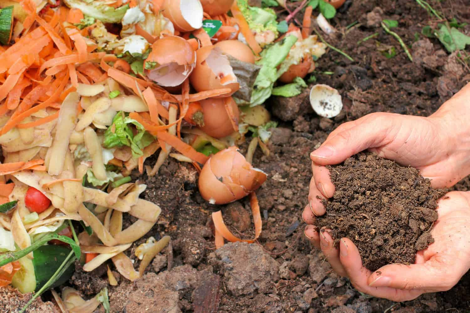 Starting a compost pile requires a few simple steps: creating the compost heap, adding organic materials, and watering and turning the compost as necessary. Photo: Gardening Know How