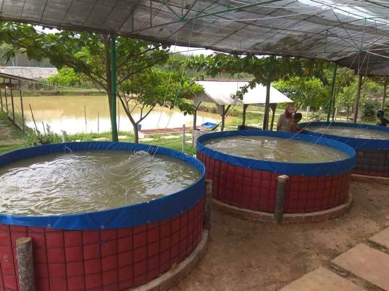 South Africa's aquaculture has experienced a rapid increase since 2012 although the market has been under some pressure in the wake of covid-19. Photo: Supplied