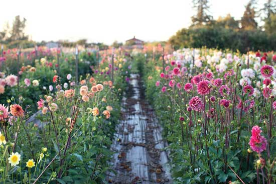 Profitable, small-scale farming is possible. Cut flowers are one of the highest-grossing crops per hectare. Photo: Supplied