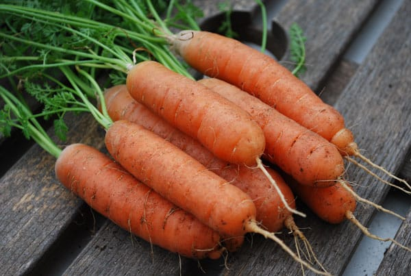 Baby carrots can be harvested in just 30 days. Photo: Supplied