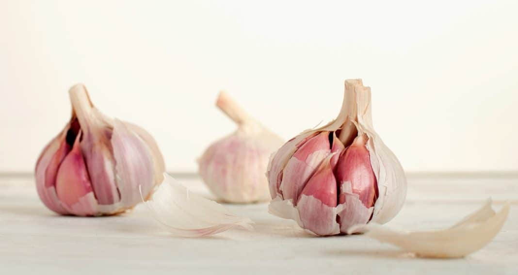 garlic prices how to grow your own garlic