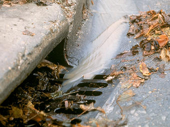 Water channelled to urban storm water drains is immediately lost to the soil and the creatures in it. Photo: Supplied