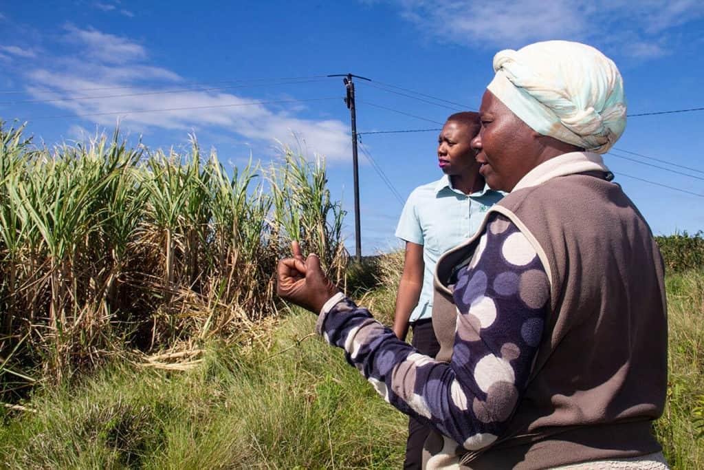 Rejoice Ncwane explains how she has improved her crop management of the 8ha under sugarcane. Photo: Shukela Plus