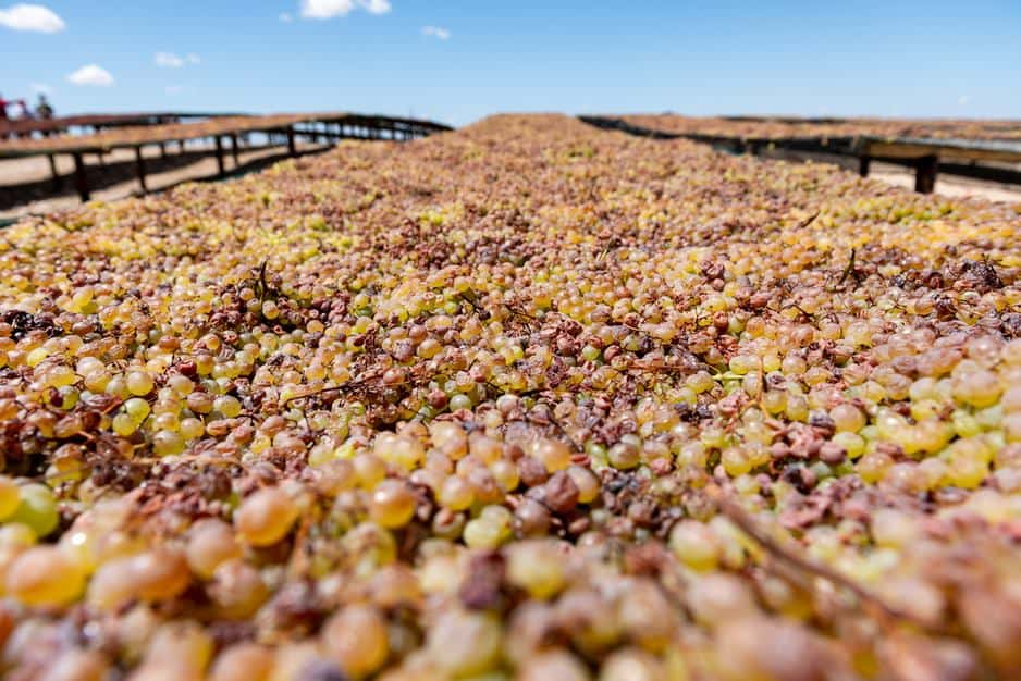 The Raisin industry is hard at work to mitigate challenges brought on by the recent rains. Photo: Raisin SA/Facebook