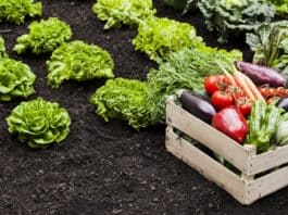 VEGGIES: Planting vegetables in their right season will greatly enhance your harvest, says plant advisor Gaye Boshoff. Photo: Supplied/Food For Mzansi