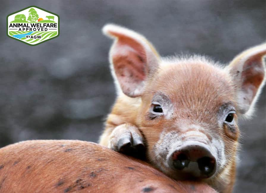 Boschrivier Farm near Plettenberg Bay in the Western Cape received A Greener World Animal Welfare Certification.