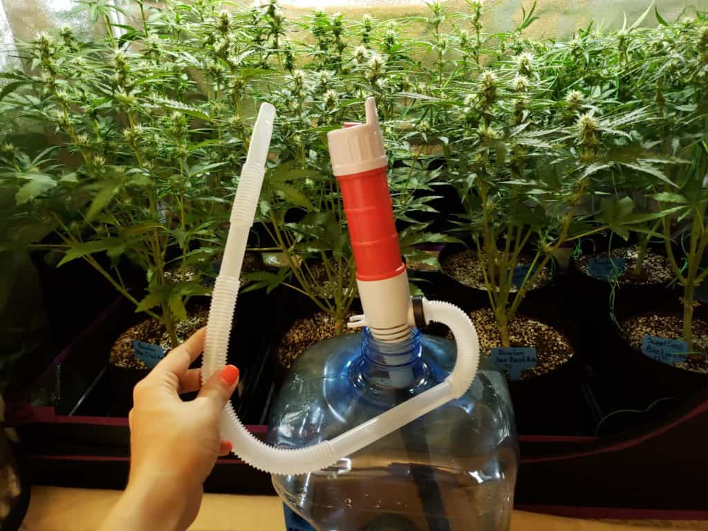 """Cannabis growers need to have a firm grip on water drainage and retention. Water should drain well, as cannabis doesn't like to have """"wet feet"""" for long. Also, water draining too fast from the pot isn't optimal either. The soil should be able to hold water (and nutrients) for a reasonable period. Photo: Supplied/Food For Mzansi"""