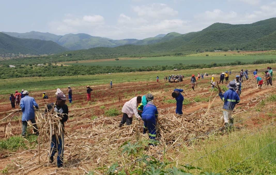 Minimum wage: In a historic first, farmworkers are now aligned with the national minimum wage, as set by government. Photo: Supplied/Food For Mzansi
