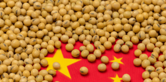 POULTRY: China has become a significant soybean consumer, as the country imports over 60% of globally traded soybeans. Photo: Supplied/JJ Gouin