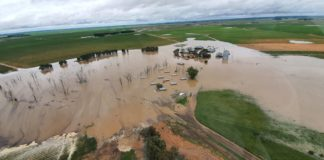 Although recent rains have been great for livestock farmers, many others, including broader communities, are facing severe damage. Photo: @vslandbou/Twitter