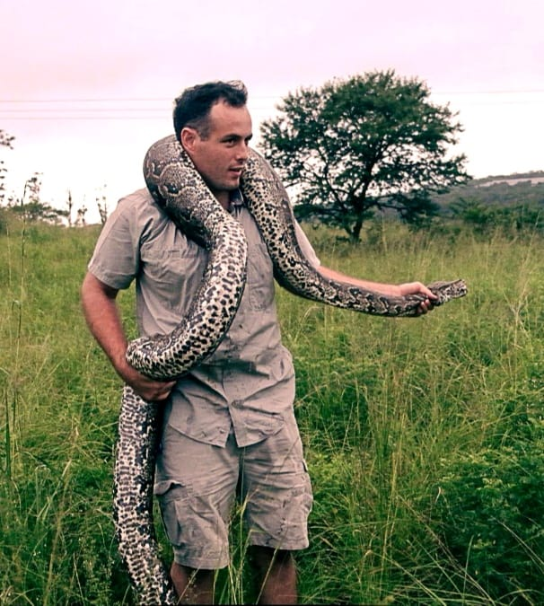 Snake rescuer Nick Evans says pythons are not venomous, but they have rows of sharp teeth, which can certainly inflict a painful bite. A bit he clearly isn't scared of... Photo: Supplied/KwaZulu-Natal Amphibian & Reptile Conservation