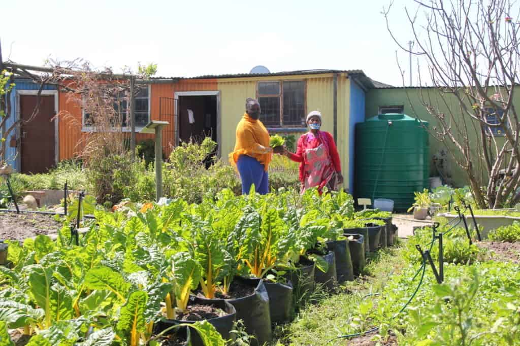Abalimi Bezekhaya has two gardens, one in Khayelitsha and another in Nyanga where it provides support and training to small-scale farmers, micro farmers and garden owners in the townships. Photo:Supplied/Food For Mzansi
