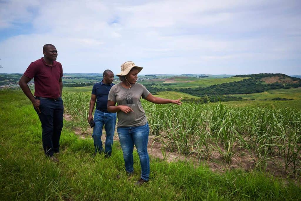 Nonhlanhla Gumede-Shabalala employs 10 permanent staff members and 14 seasonal workers. She and her team delivered 3 000 tonnes of sugarcane during the 2019-2020 season. Photo: Supplied/Food For Mzansi