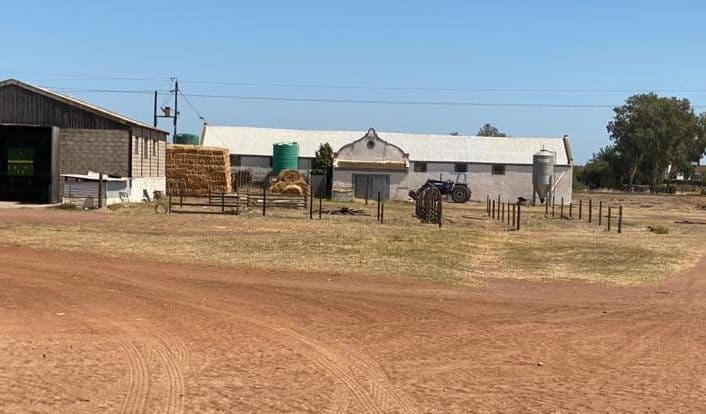 A MK veteran has now been assigned to the Colenso farm in Darling in the Western Cape. Until now, it was managed by award-winning pig farmer Ivan Cloete. Photo: Supplied/Food For Mzansi