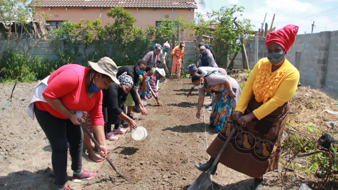 Non-profit micro-farming organisation Abalimi Bezekhaya teaches over 2 000 impoverished people from townships in Cape Town to plant their own vegetable gardens to supplement their existing, inadequate supply of food. Photo: Supplied/Food For Mzansi