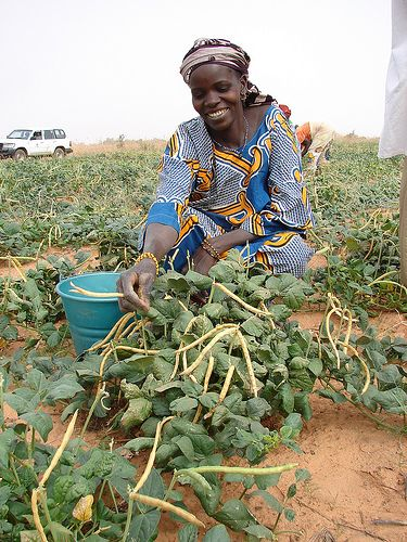 Farmers in Mozambique primarily produce sugar, soybeans, bananas, rice, vegetables, nuts, cotton and tobacco. Photo: Supplied/Food For Mzansi