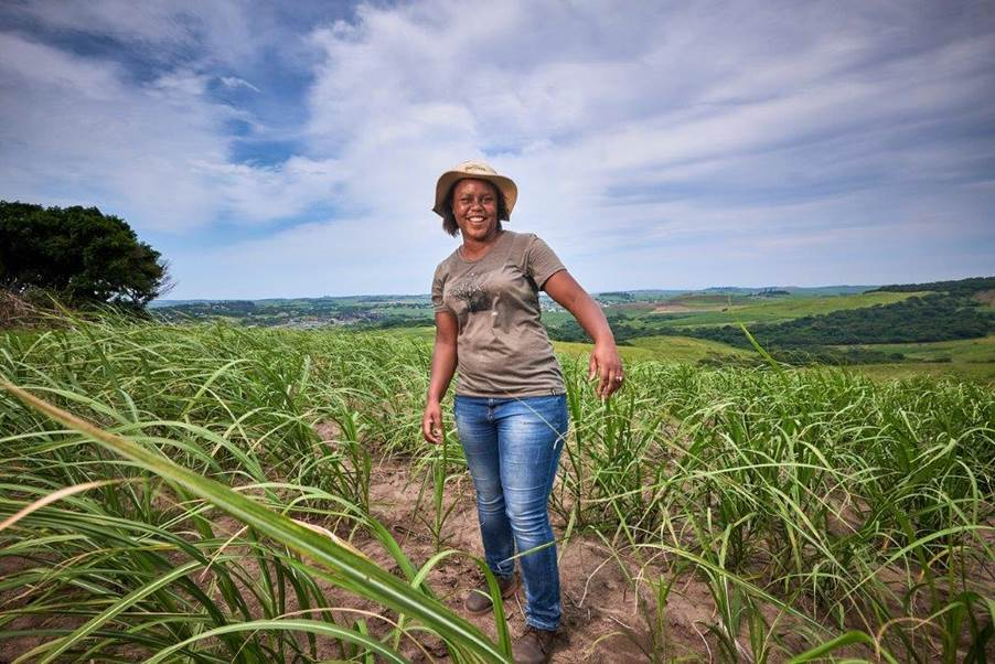 Sugarcane farmer Nonhlanhla Gumede-Shabalala is the owner of Uthandimvelo farm in KwaDukuza, formerly known as Stanger, KwaZulu-Natal. Photo: Supplied