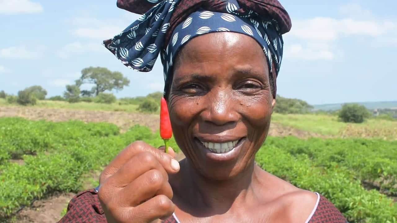 Smallholder farmers in Mozambique account for 95% of agricultural production. Through the Livelihoods, Empowerment and Development Project farmers benefit from training, access to high-quality agricultural inputs and services. Photo: Supplied/Food For Mzansi