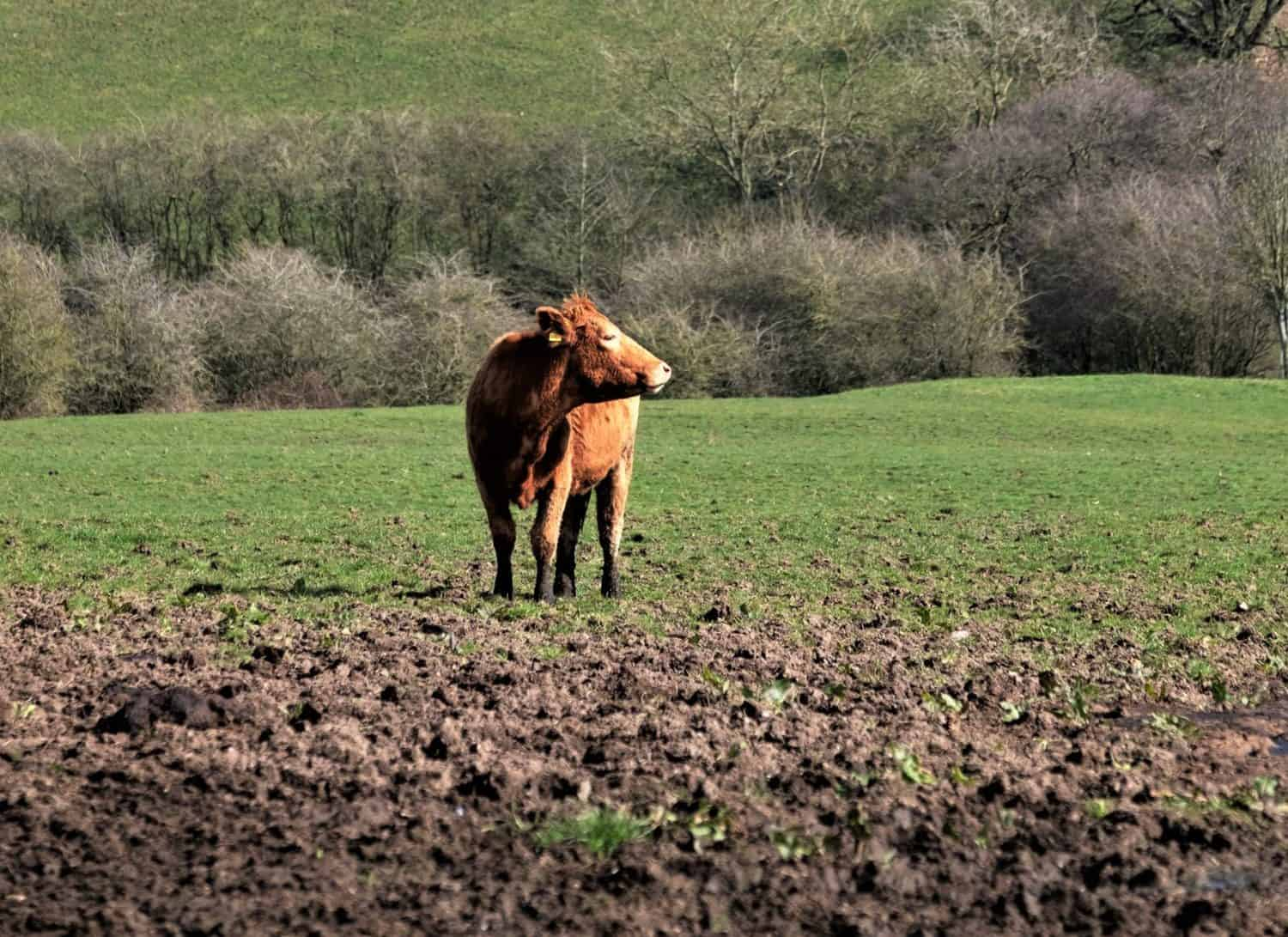 With the expected persistent wet conditions over parts of South Africa, farmers are advised to be on the lookout for livestock pastures flooding and crop damage. Photo: Supplied/Food For Mzansi