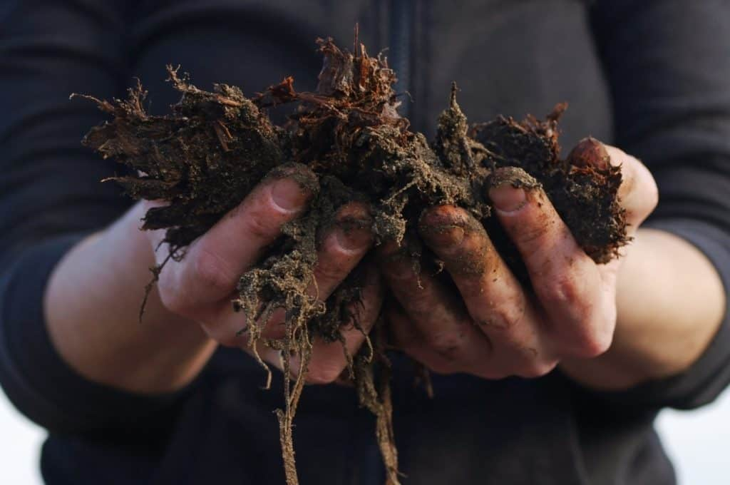 Soil is the foundation of most types of agriculture, yet soil health is negatively impacted by many farming practices. Photo: Supplied/Food For Mzansi