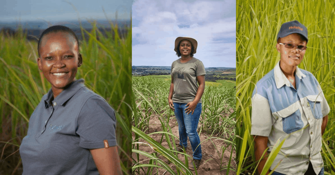 Meet the sugarcane queens of KwaZulu-Natal: From the left are Zibo Makhaye, farm manager at Uzinzo Sugar Farming, Nonhlanhla Gumede-Shabalala, owner of Uthandimvelo farm, and Nosisa Dube, a junior farm assistant at Simamisa Farming. Photos: Supplied/Food For Mzansi