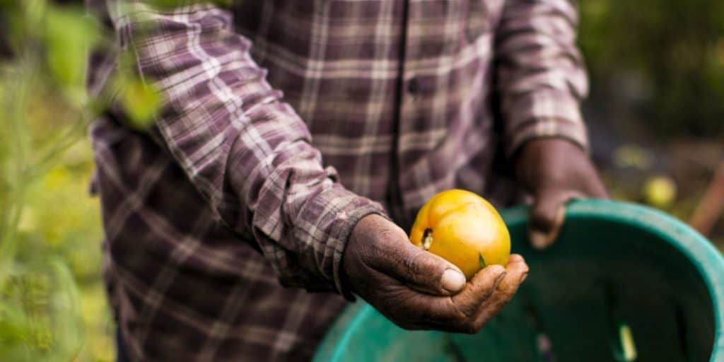 African agriculture: Agriculture is one sector that's no stranger to adverse external factors presenting risk that threatens business continuity. However, Covid-19 has had a severe knock-out effect on many up-and-coming farmers. Photo: Supplied/Getty Images