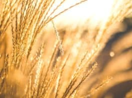 The top imported products across the BRICS countries include wheat, according to Agbiz. Photo: Supplied/Food For Mzansi