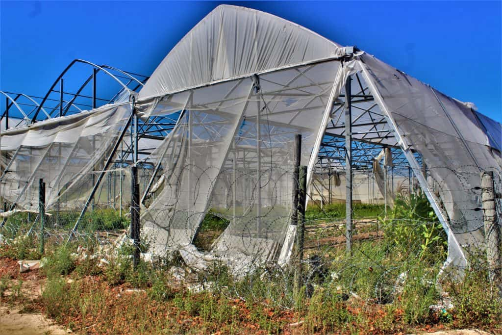 Farm crime: The Algina Wholesale Plant Nursery in Firgrove in the Western Cape has been struggling to recover from crime-induced losses since the first break-in seven years ago. Photo: Duncan Masiwa/Food For Mzansi