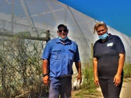 Farm crime: Eugene Simons (on the right), owner of Algina Wholesale Plant Nursery, and her husband, Alan, worry that their once thriving small-scale nursery won't survive another incident of crime. Photo: Duncan Masiwa/Food For Mzansi